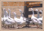 Psalm 98 Geese